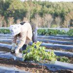 日本の農業のこれからを占う農業改革