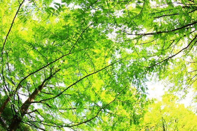 森林を守る活動が収益に直結している「SUNTORY」