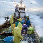 漁業の世界にもIOT