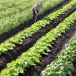 農業の世界も省人化
