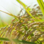 農業の世界でも進む、経験の数値化