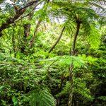 自然エネルギーで先をゆく沖縄