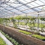 日本農業|大規模化でオランダを目指せ!!