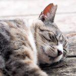 熱帯夜続きで最近、睡眠の質がイマイチの方へ