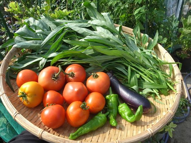 野菜鮮度を長期保持。きっかけはもったいない